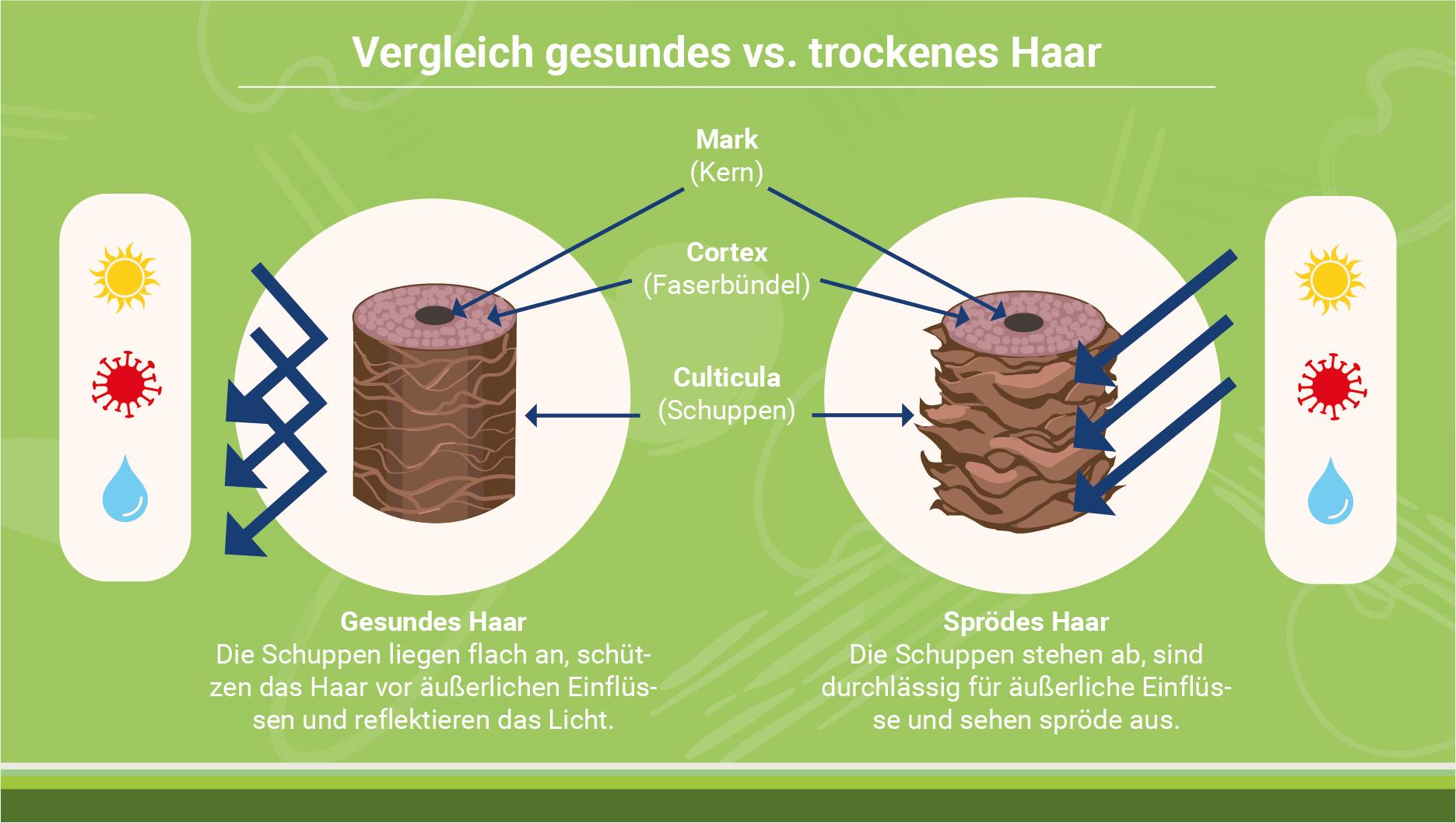 infografik-gesunde-haare-vs-trockene-haare
