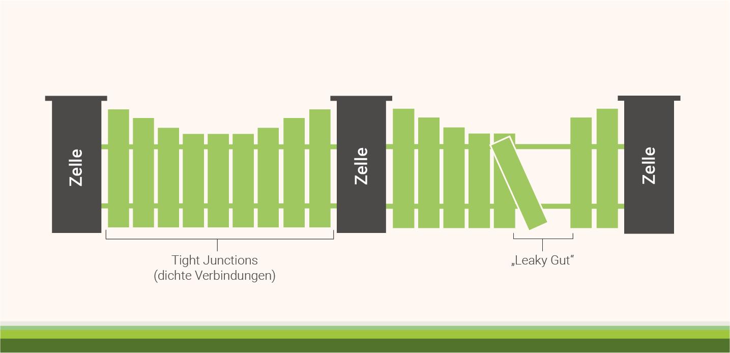 infografik-glutamin-barrierefunktion-deines-darms-staerken