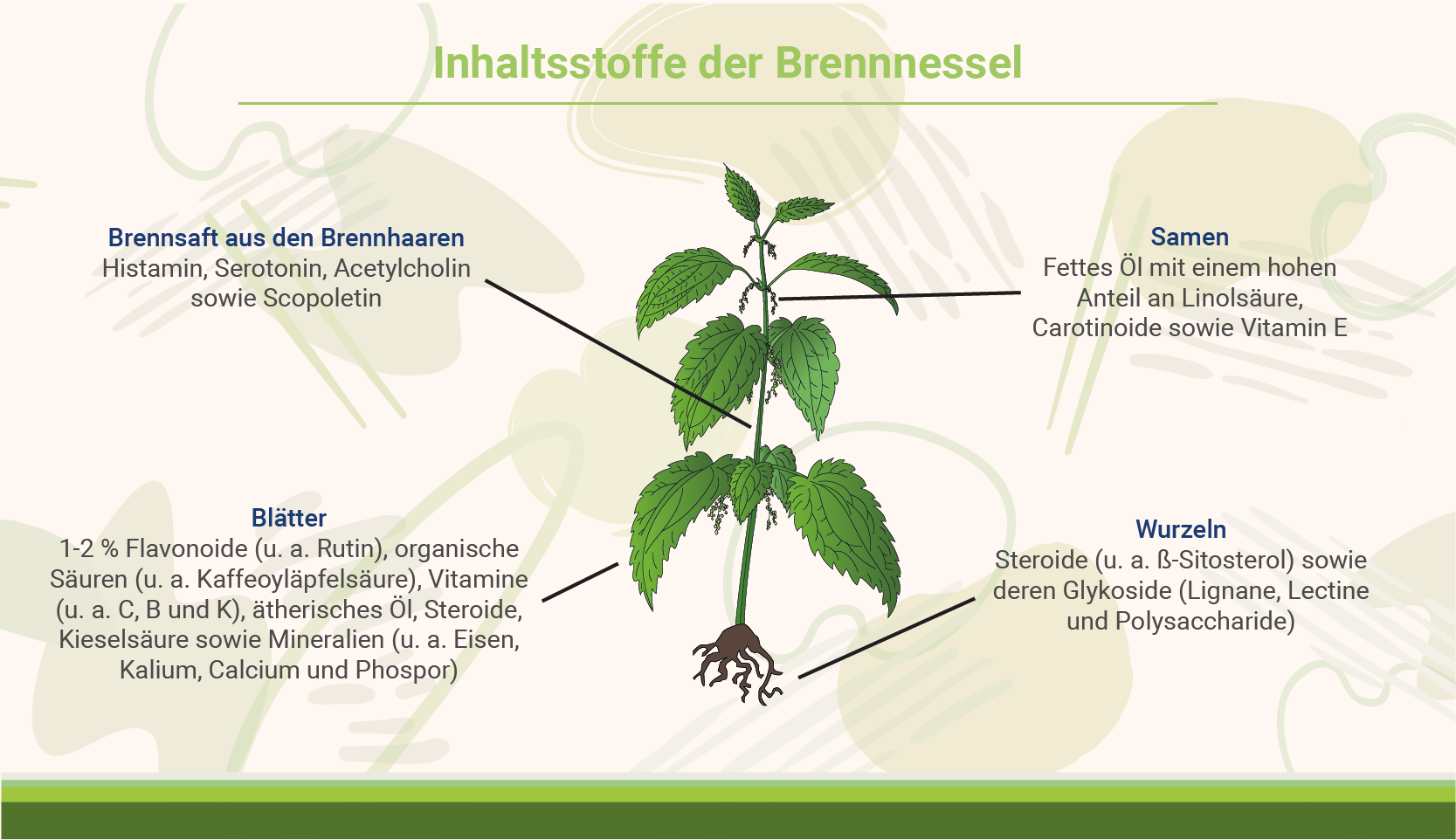 infografik-inhalt-der-brennnessel